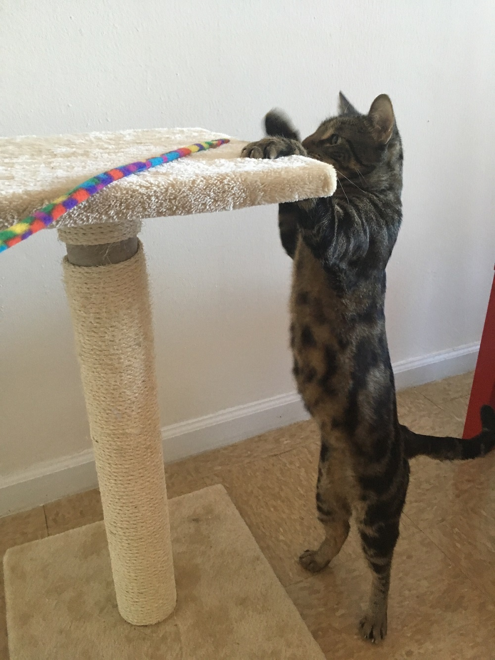 Upcycled Diy Cat Scratching Post With Carpet Easy Tutorial