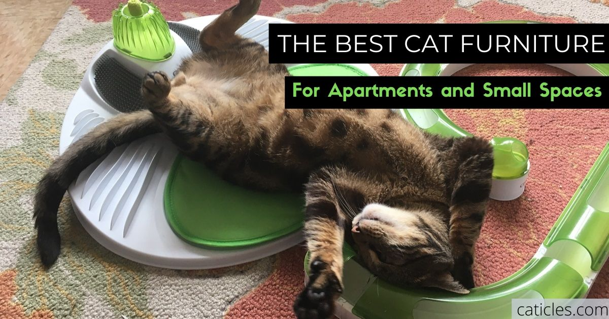 10 Best Cat Furniture Pieces For Apartments 2020 Guide