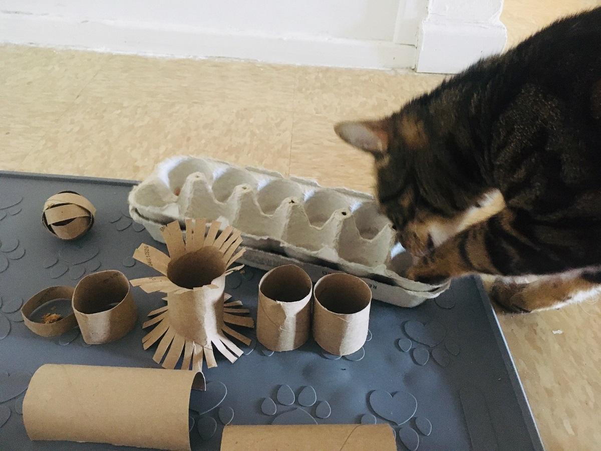 jouets de puzzle de nourriture de rouleau de papier toilette