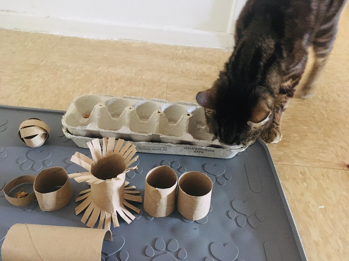 13 Simple Diy Toilet Paper Roll Toys For Cats Caticles