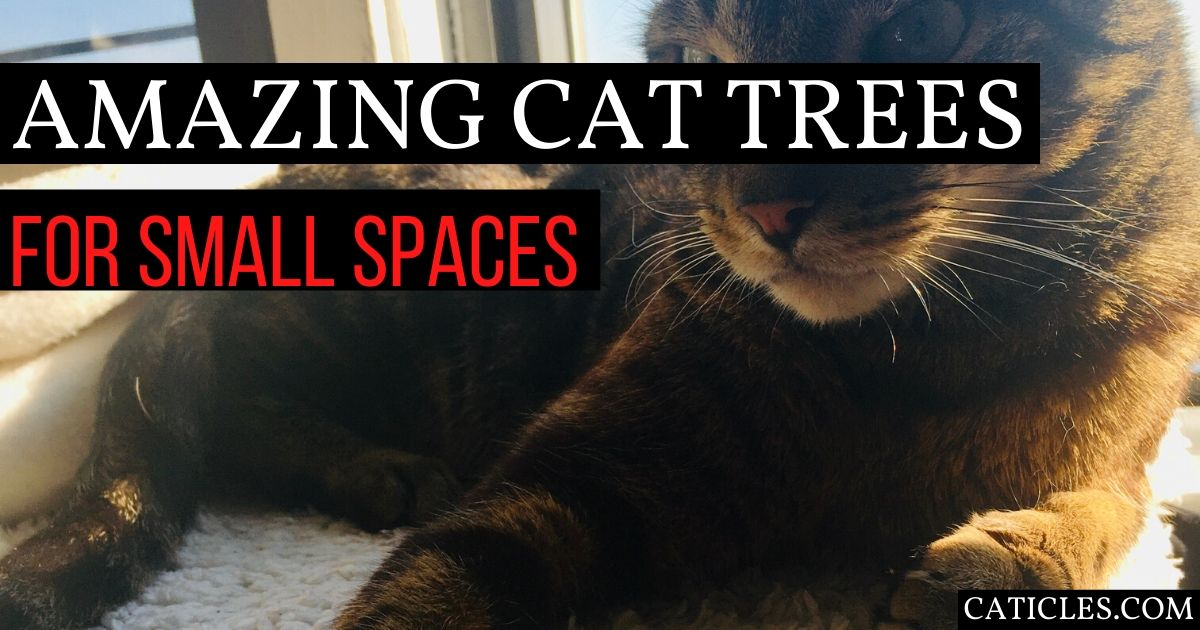 Wildest Cat Trees For Apartment Living 2020 Modern Ideas