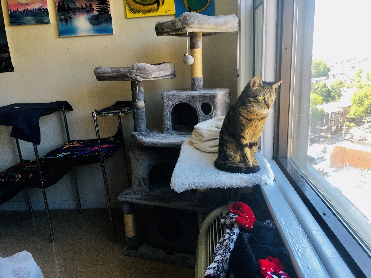 19 Ideas For Cats In Small Apartments You Ll Both Love Caticles