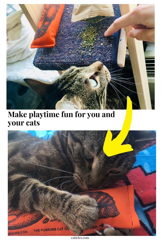 image de broche rendre la récréation amusante pour votre chat
