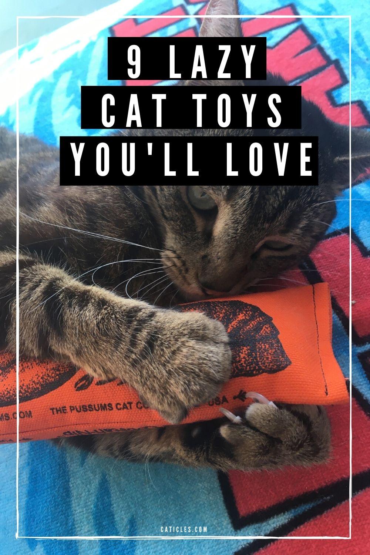 pin image jouets paresseux chat