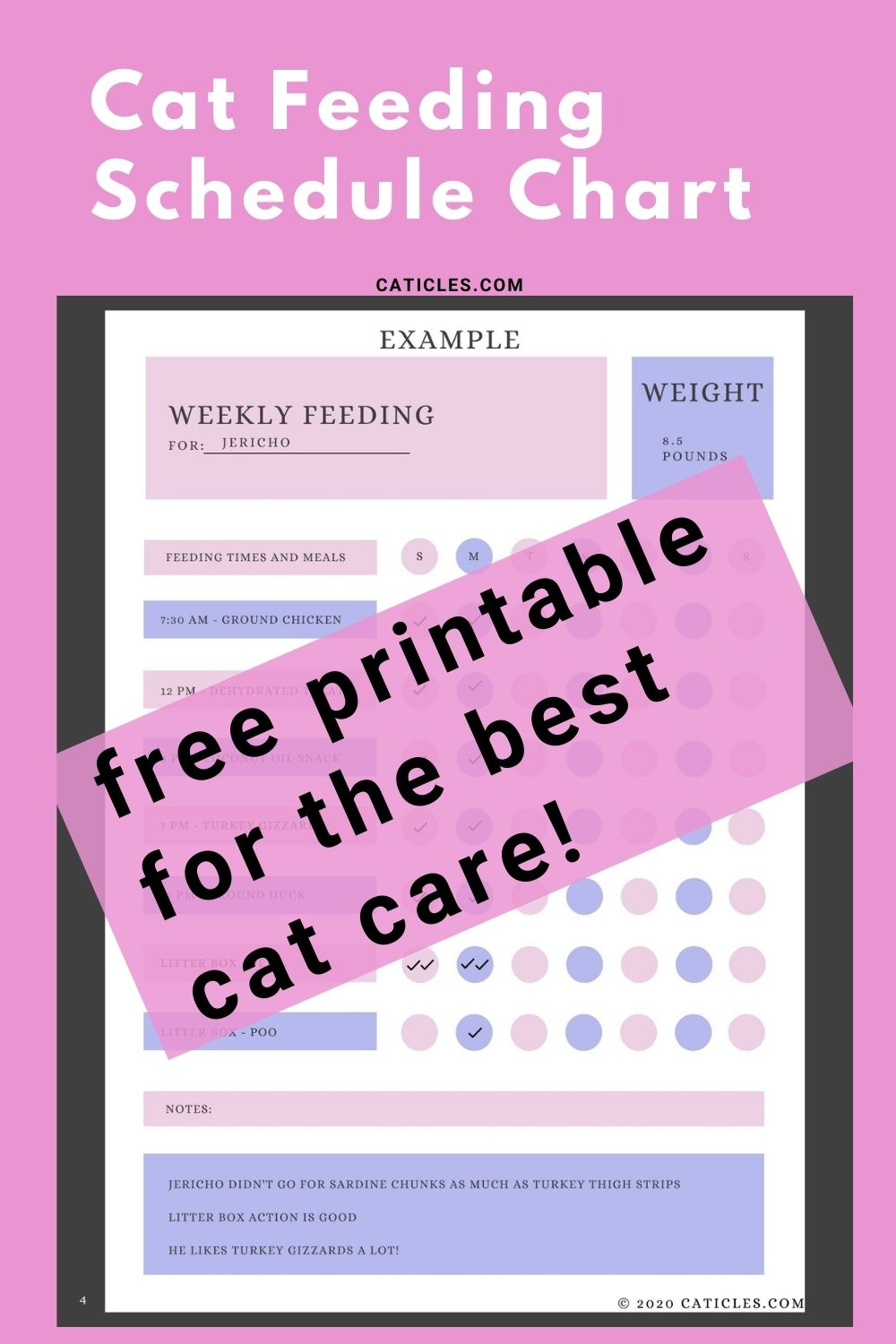 Cat Feeding Schedule Chart [How Many Times To Feed Guide