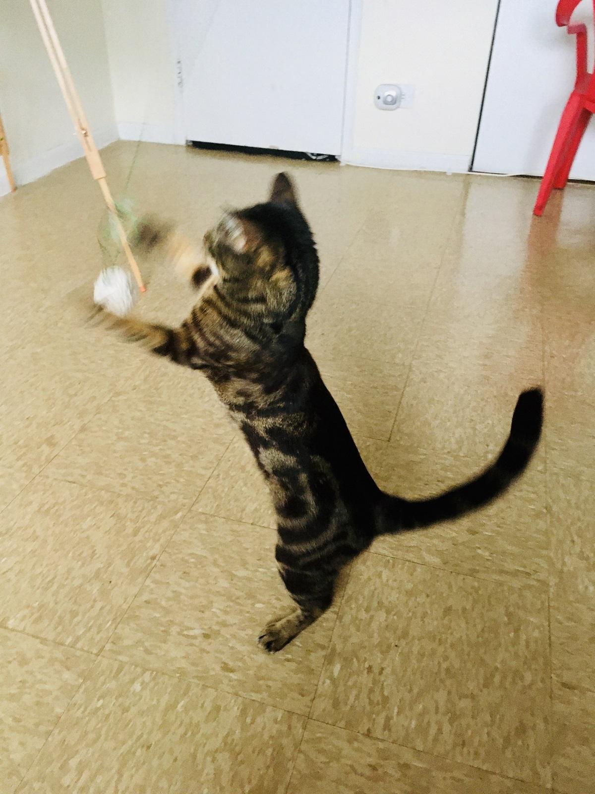 chat jouant avec une baguette