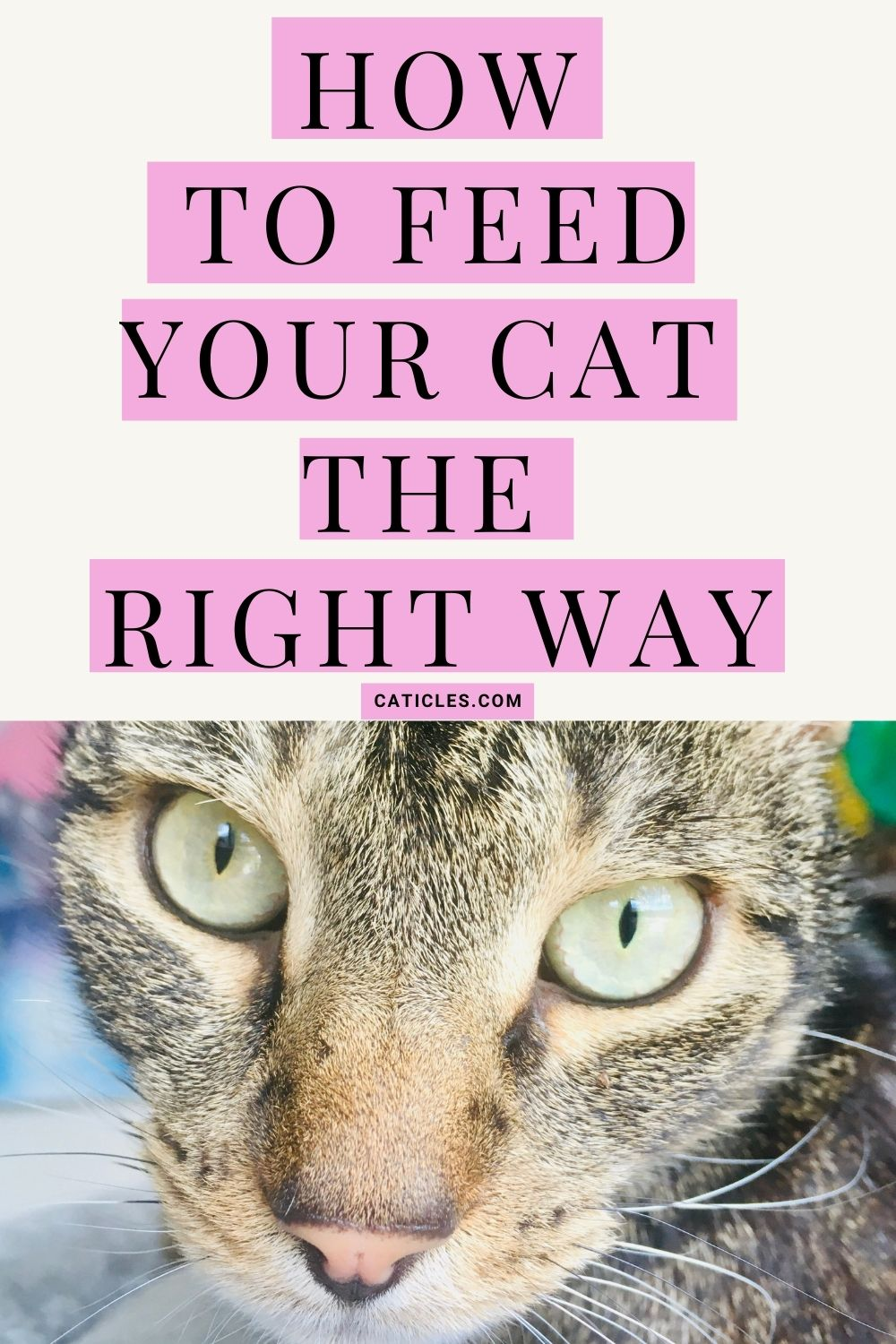 Cat Feeding Schedule Chart How Many Times To Feed Guide